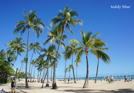 Hawaii trip 2017  ハワイトリップ vol.1_e0253364_13571120.jpg