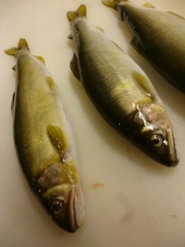 愛する魚です。_e0252966_13001603.jpg