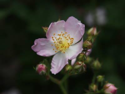小さな花たち_a0129867_16191047.jpg