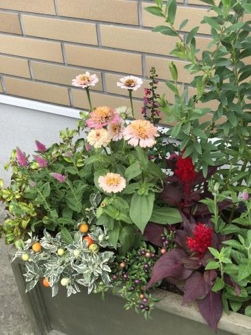 お客様の花壇やプランターの植え替え仕事ももう少し・・・雨が降らなくてはかどります🌞_b0137969_06035599.jpg