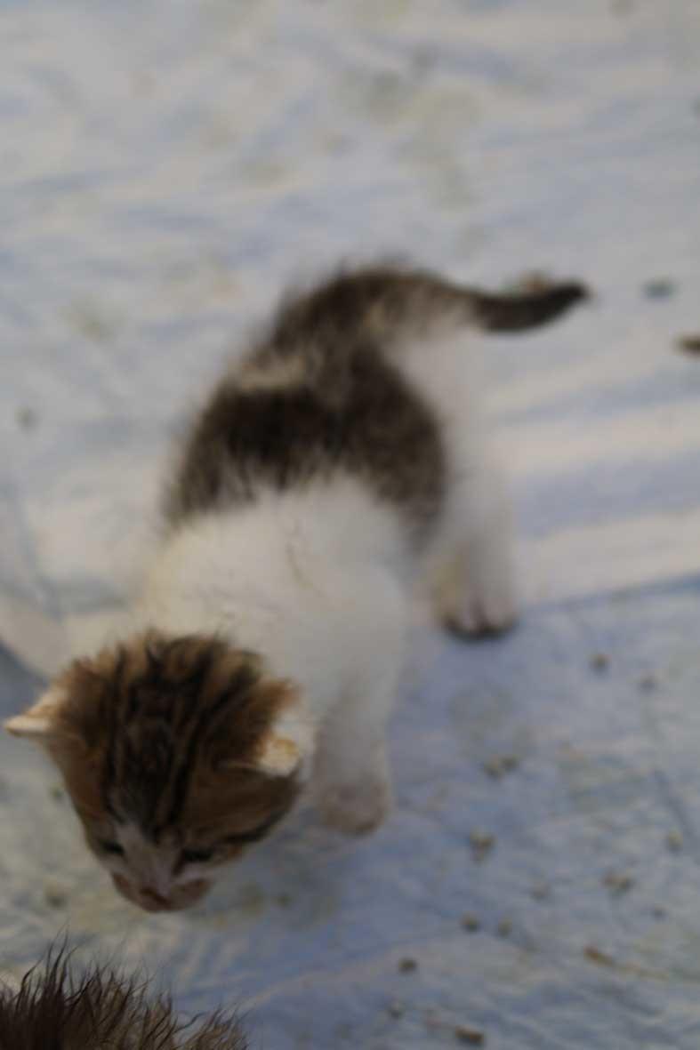 子猫_b0107576_23123291.jpg