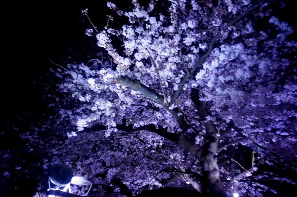 東京Vol.4 (2016年春)夕方はホテルラウンジで。_c0180686_03070499.jpg
