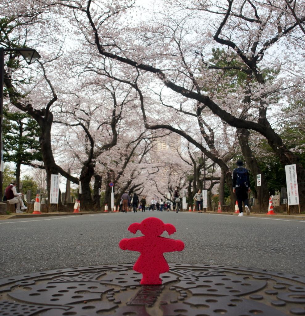 東京Vol.3 (2016年春)上野桜木「あたり」_c0180686_03092207.jpg
