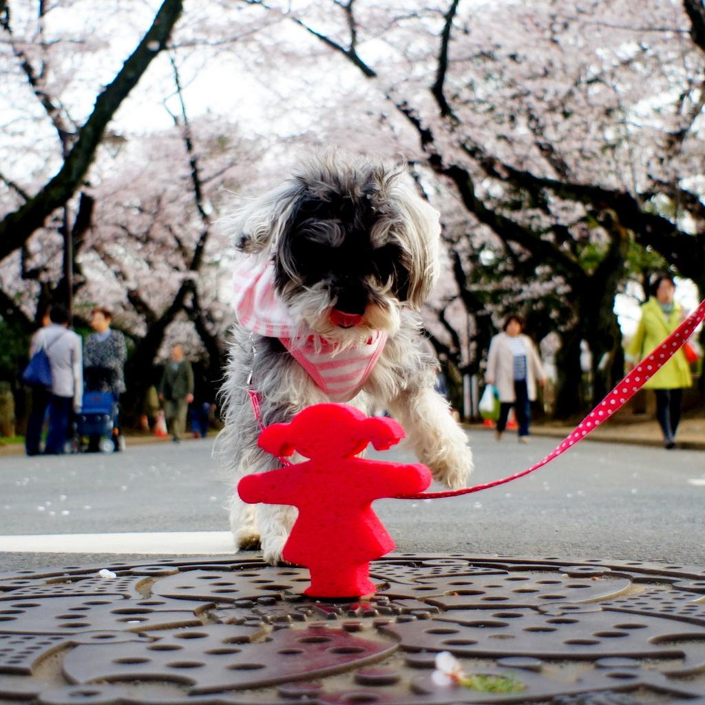 東京Vol.6 (2016年春)AMPELMANN 撮影とメイキング写真_c0180686_19383815.jpg