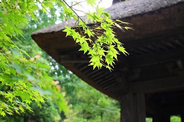 鎌倉 竹の寺 報国寺 ②_f0374092_21184804.jpg