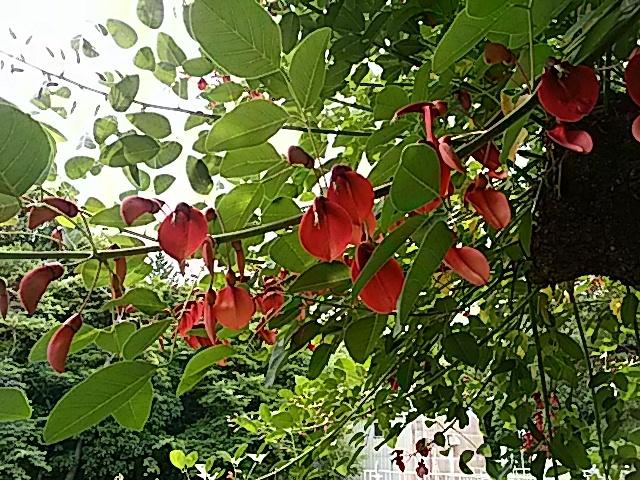 今治市民の森の6月中旬の花…2017/6/17_f0231709_22503465.jpg