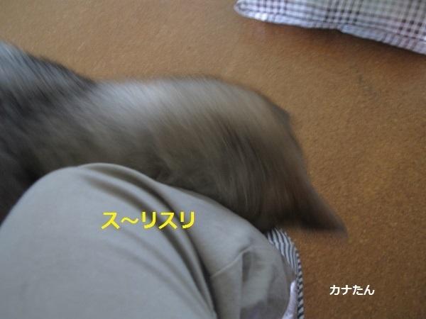 f0143123_11095241.jpg