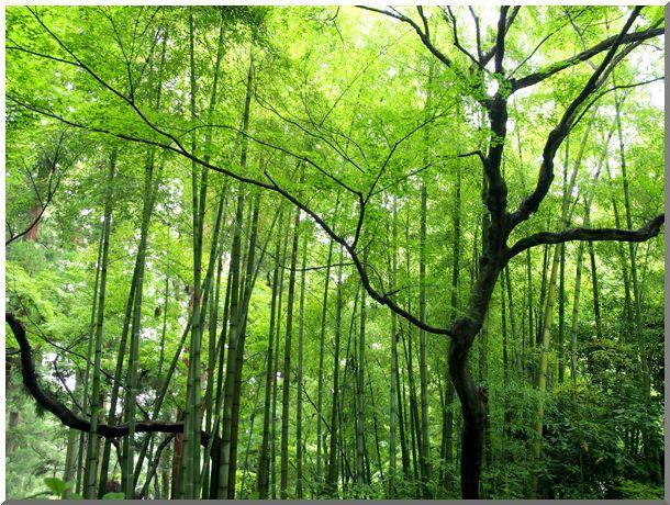 梅雨の鎌倉_d0123528_1764971.jpg