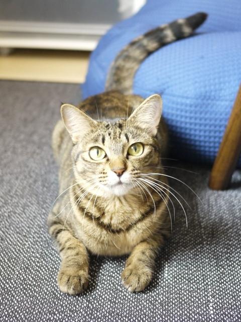猫のお留守番 琥珀ちゃん編。_a0143140_19190383.jpg