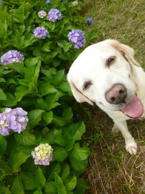 with dog   空梅雨_a0165160_11343457.jpg