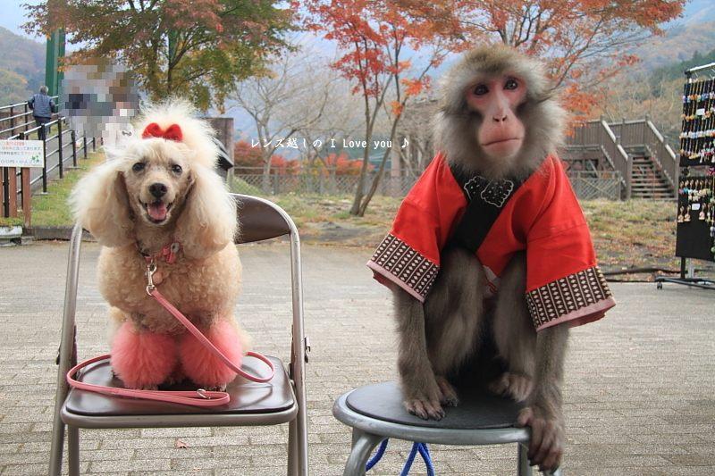 犬猿の仲♪_d0367763_21152768.jpg
