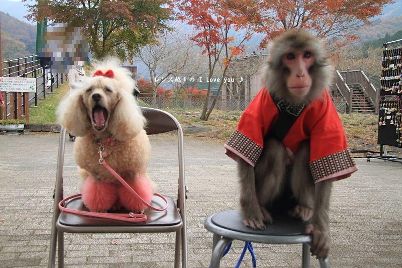 犬猿の仲♪_d0367763_21152801.jpg