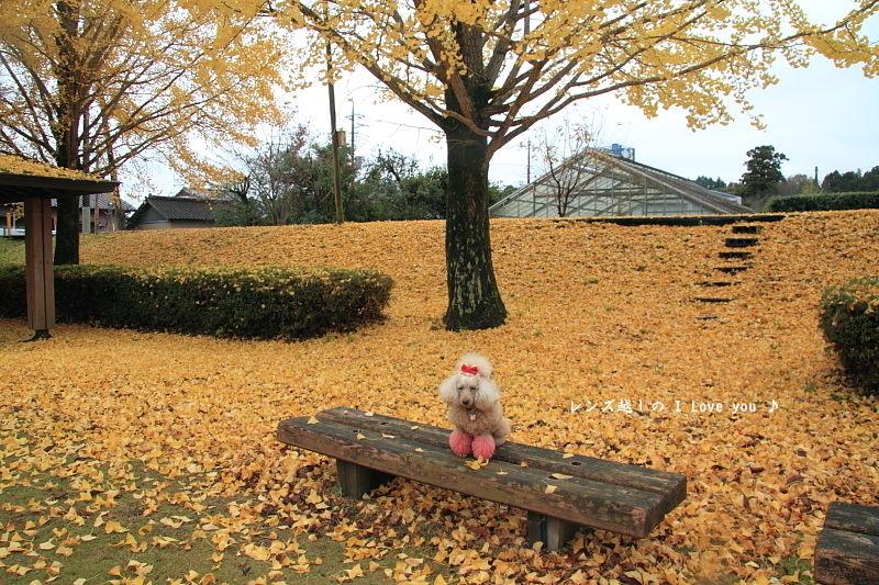 茨城県と栃木県の境にある神社にて♪_d0367763_21154152.jpg