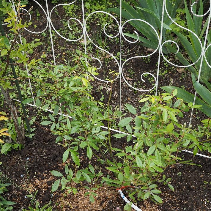 お庭作り_a0292194_22563813.jpg