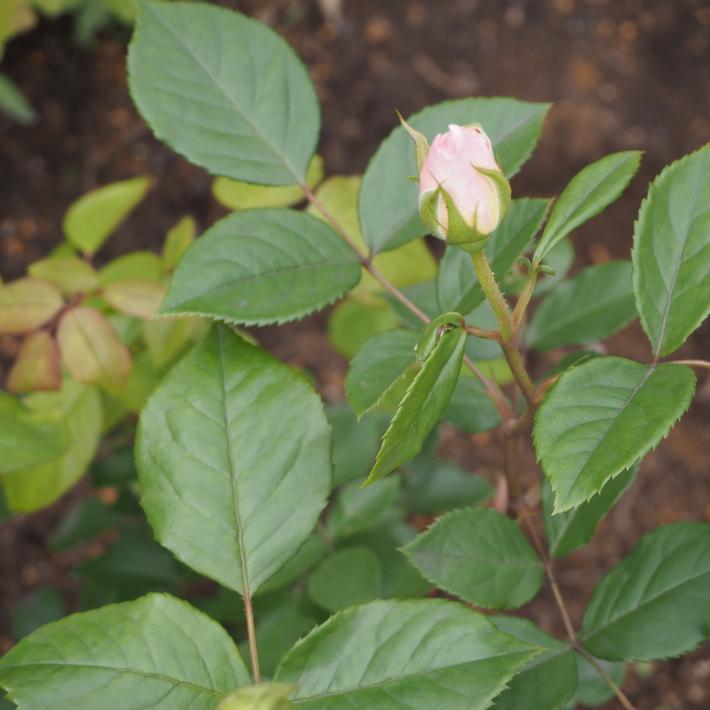 お庭作り_a0292194_2310272.jpg