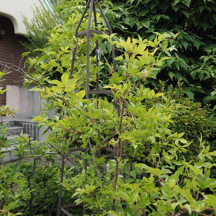 お庭作り_a0292194_233108.jpg