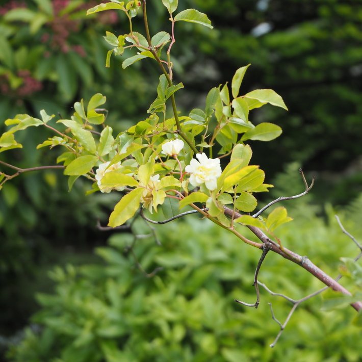 お庭作り_a0292194_2333566.jpg