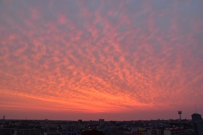 夜明けから夕暮れまで(前半)(*^_^*)_c0049299_22210908.jpg