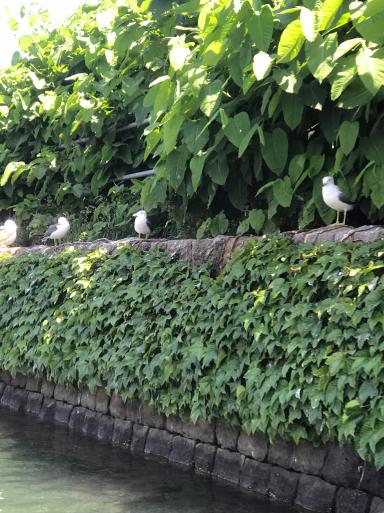 懐かしの北海道_f0101201_20172597.jpg