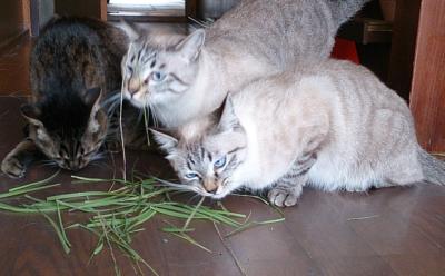 やっぱりネコは草が好き(岡)_f0354314_21432027.png