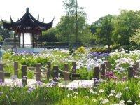 77種類の花菖蒲が咲き誇っています。_c0133422_232284.jpg