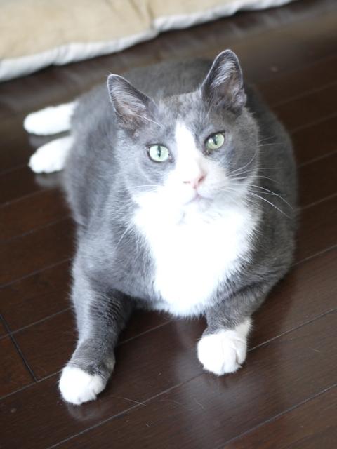 猫のお留守番 カン太くん編。_a0143140_19011589.jpg