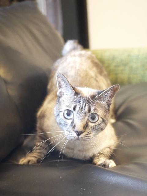 猫のお留守番 ルノーちゃん編。_a0143140_19052133.jpg