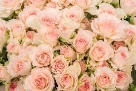 ピンク色と女性惑星の関係_f0008555_22380227.jpg