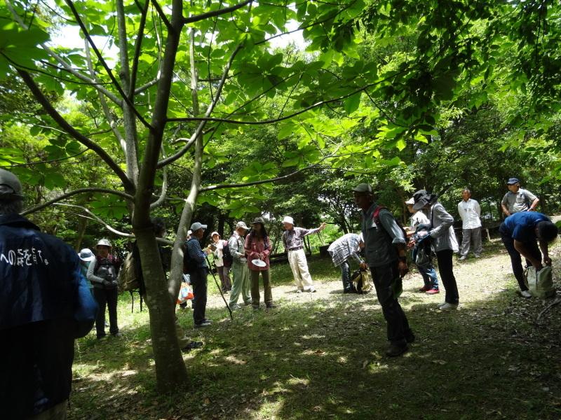 作業小屋の床張り&自然観察指導員大阪連絡会来訪・・・うみべの森_c0108460_21253852.jpg