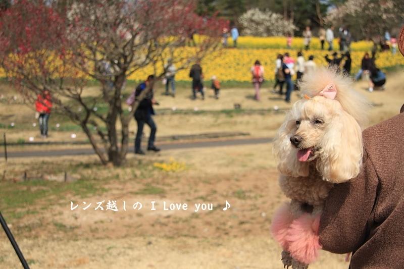Yellow * Yellow * HAPPY ♪_d0367763_18151650.jpg