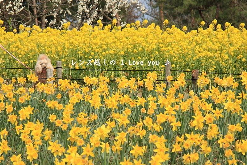 Yellow * Yellow * HAPPY ♪_d0367763_18151962.jpg