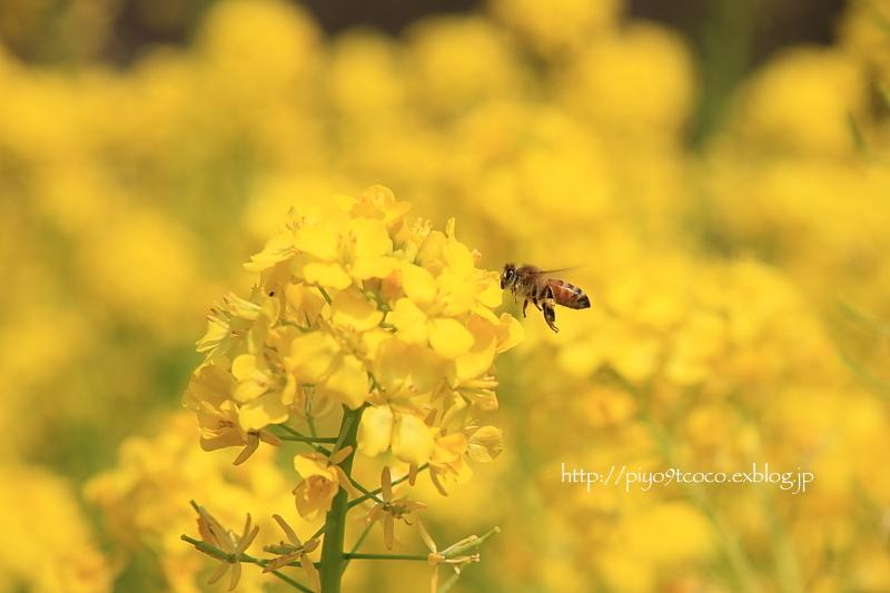 Yellow * Yellow * HAPPY ♪_d0367763_18152107.jpg
