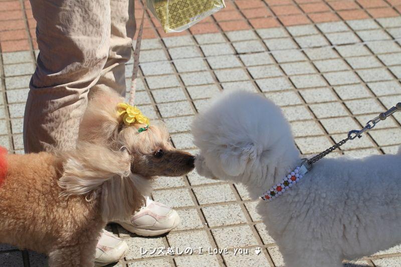 コキアの紅葉♪ ~ひたち海浜公園~_d0367763_20462156.jpg
