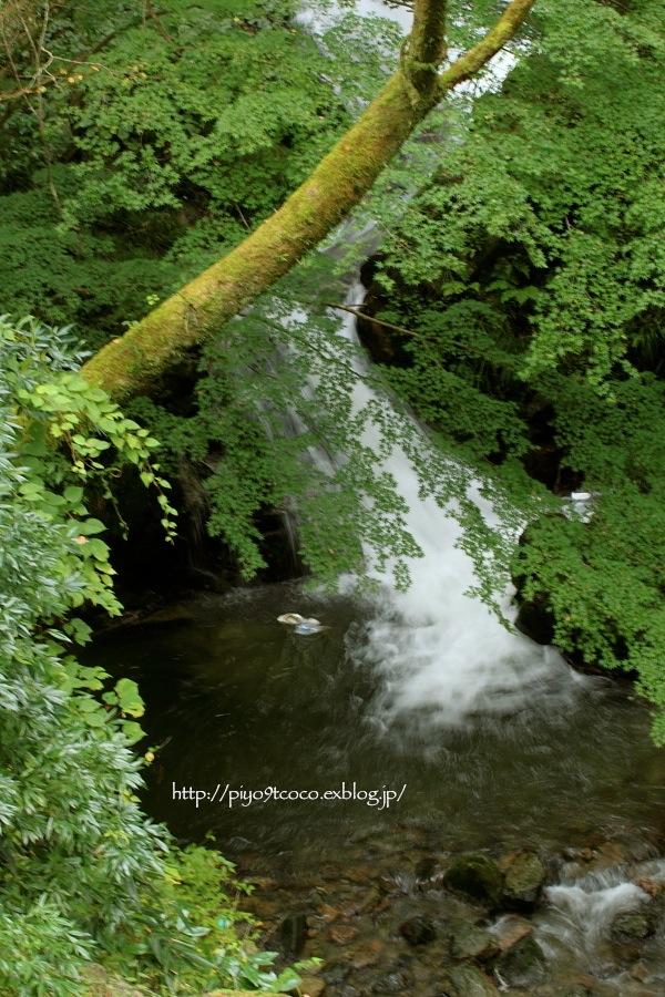 「滝」を撮ってみたくて・・・♪_d0367763_20465496.jpg