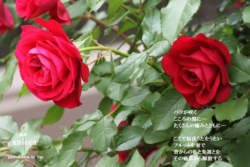 f0351844_06380751.jpg