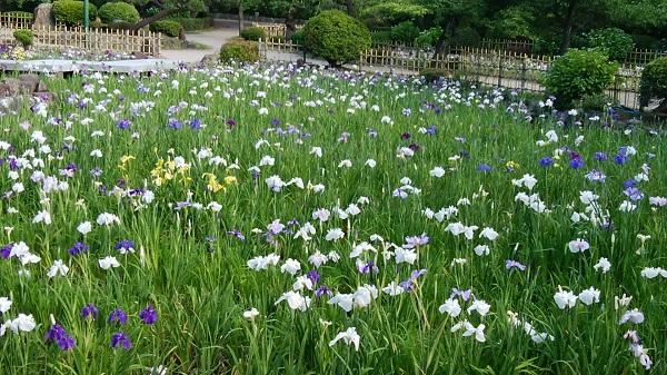鶴舞公園散歩_a0098746_9573260.jpg