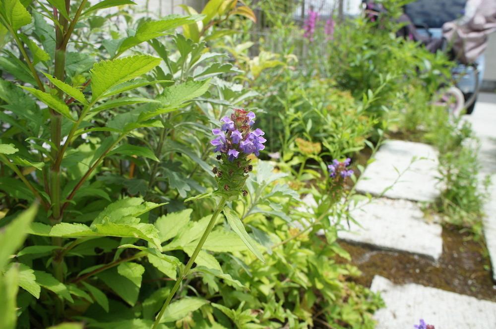 山野草の花々_c0201749_11085809.jpg