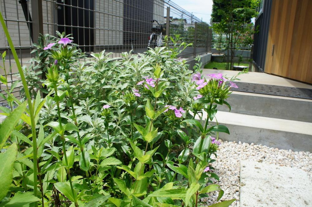 山野草の花々_c0201749_11085833.jpg