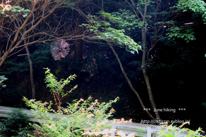 ひとり山歩き 6月の道_e0348754_17582623.jpg