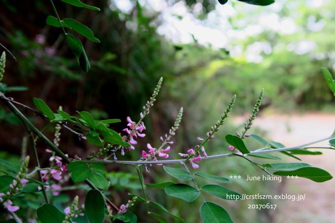 ひとり山歩き 6月の道_e0348754_21205467.jpg