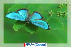 d0367763_19472161.jpg