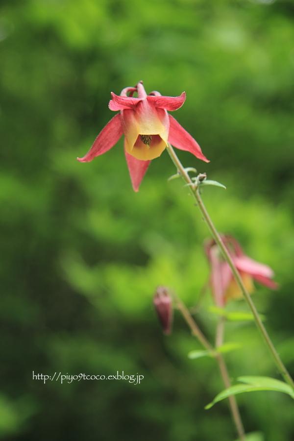 湿地のお花♪_d0367763_21450643.jpg