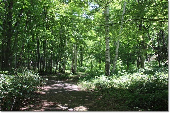 定山渓の森('17・6・14)_f0146493_10253848.jpg