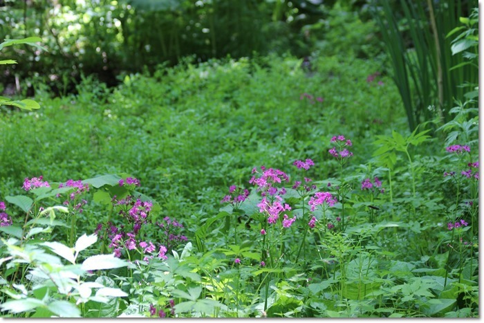 定山渓の森('17・6・14)_f0146493_10275719.jpg