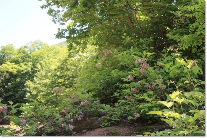 定山渓の森('17・6・14)_f0146493_10293408.jpg