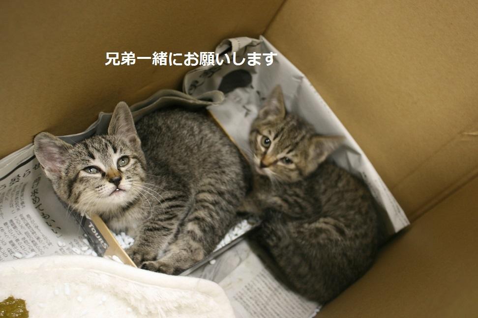 【移動先募集】センター(支所)収容の犬猫(6/17訪問)_f0242002_21542493.jpg