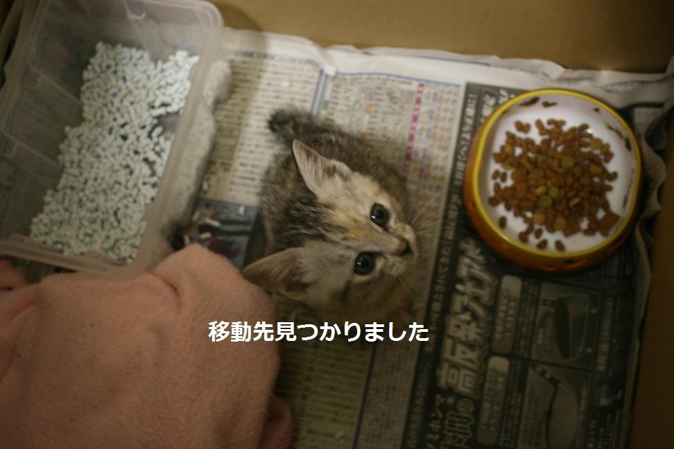 【移動先募集】センター(支所)収容の犬猫(6/17訪問)_f0242002_21543636.jpg