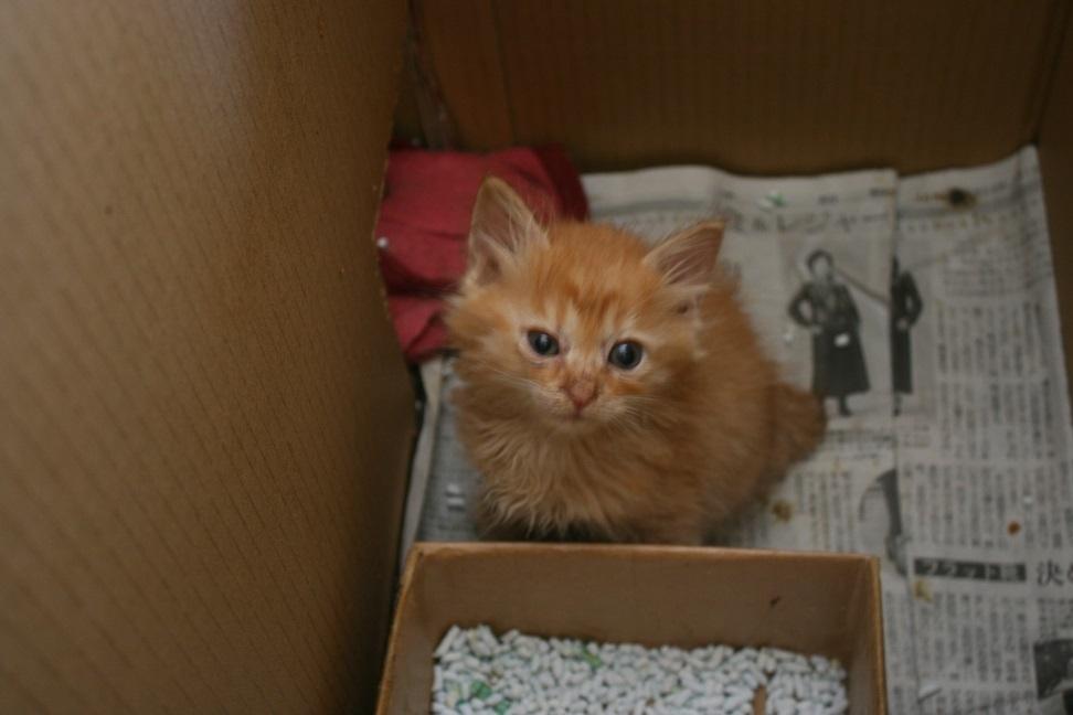 【移動先募集】センター(支所)収容の犬猫(6/17訪問)_f0242002_22075576.jpg