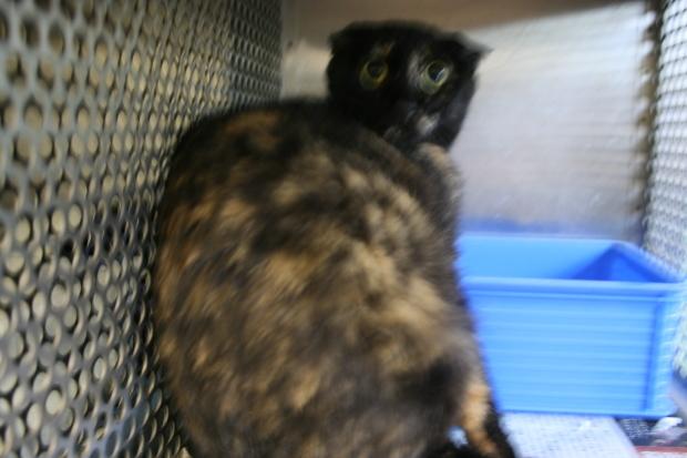 【移動先募集】センター(支所)収容の犬猫(6/17訪問)_f0242002_22160914.jpg