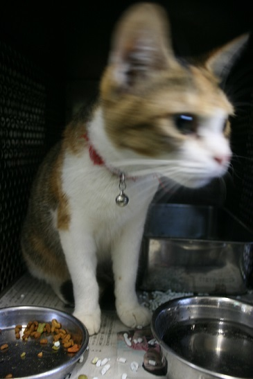 【移動先募集】センター(支所)収容の犬猫(6/17訪問)_f0242002_22273290.jpg